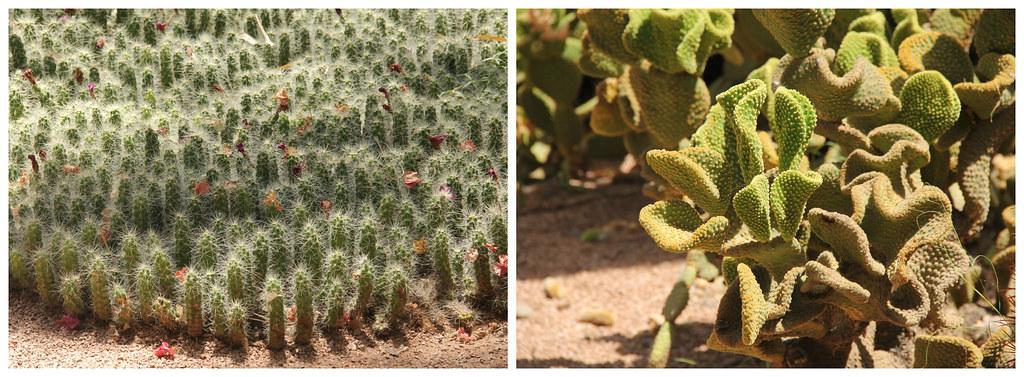 More cacti, Jardin Majorelle