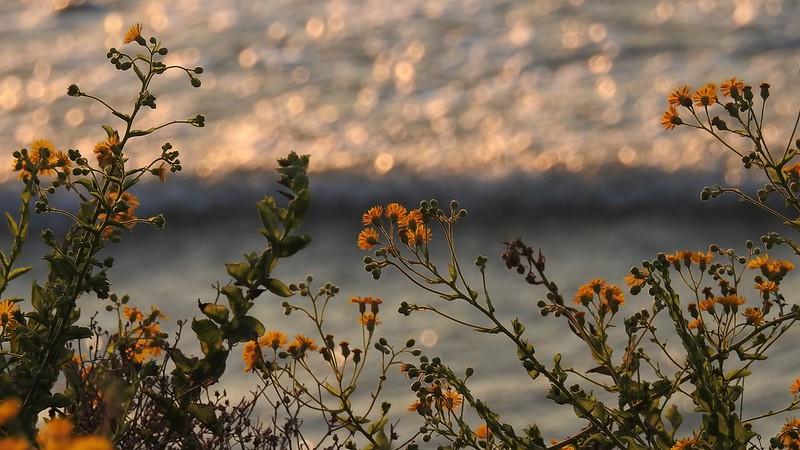 Цветы в ноябре