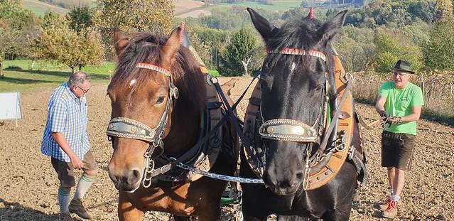 Pferdetreffen 2019