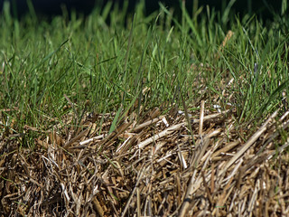 Green grass growing on a bale of hay | by mark owens2009