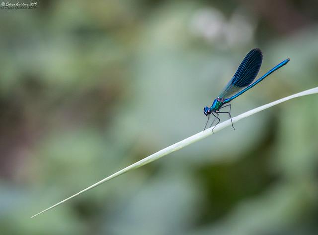 Blu-azzurro-verde