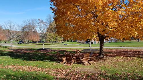 November shade