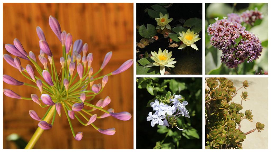 Flowers, Jardin Majorelle