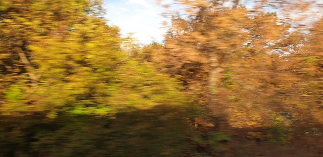 Leaves at speed