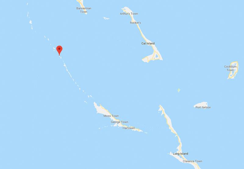 Cerditos nadadores Bahamas-2
