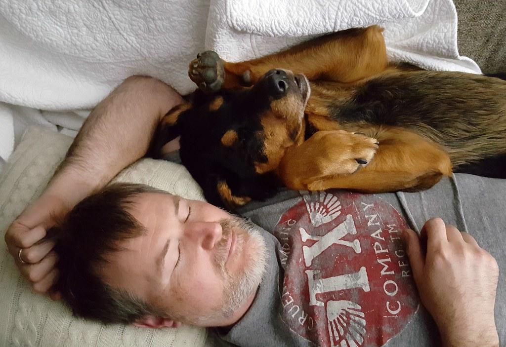 rottweiler senior dog
