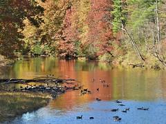 Little River, Westfield MA