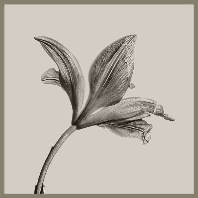 Fleur-de-Lis #2 2019;