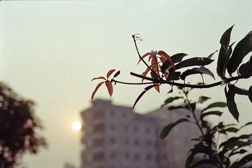 bangladesh leaves morning istillshootfilm analog nikon nikonf100 pacificimageprimefilm3650pro3 film ai50mmf14 dhaka analogphotography sunrise fujifilm aftabnagar