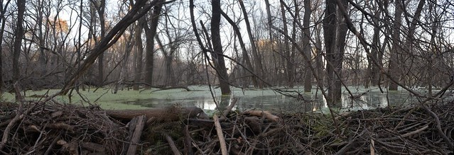 Big Beaver Dam