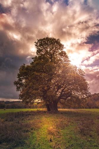 trees leaves sunlight landscape nature