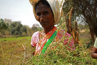 Women farmer in Jharkhand, India | by CGIAR Climate