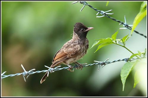 birds nature india wayanad kerala canoneos6dmarkii tamronsp150600mmg2