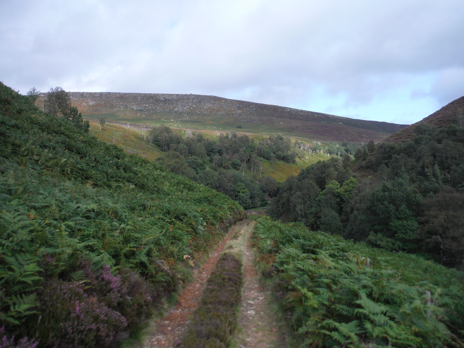 Track in Upper Derwent Valley towards Crow Stones Edge SWC Walk 350 - Fairholmes Circular (via Bleaklow and Derwent Head)