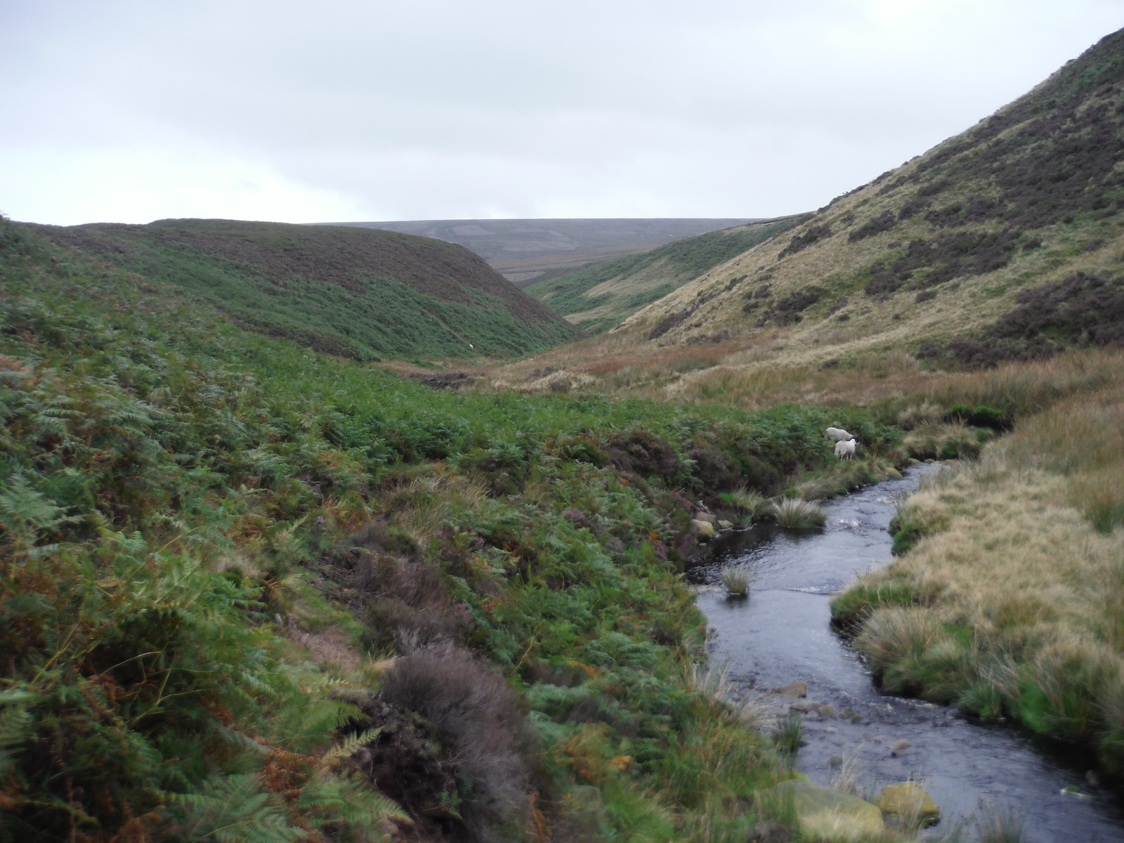 Upper Derwent Valley, downstream SWC Walk 350 - Fairholmes Circular (via Bleaklow and Derwent Head)