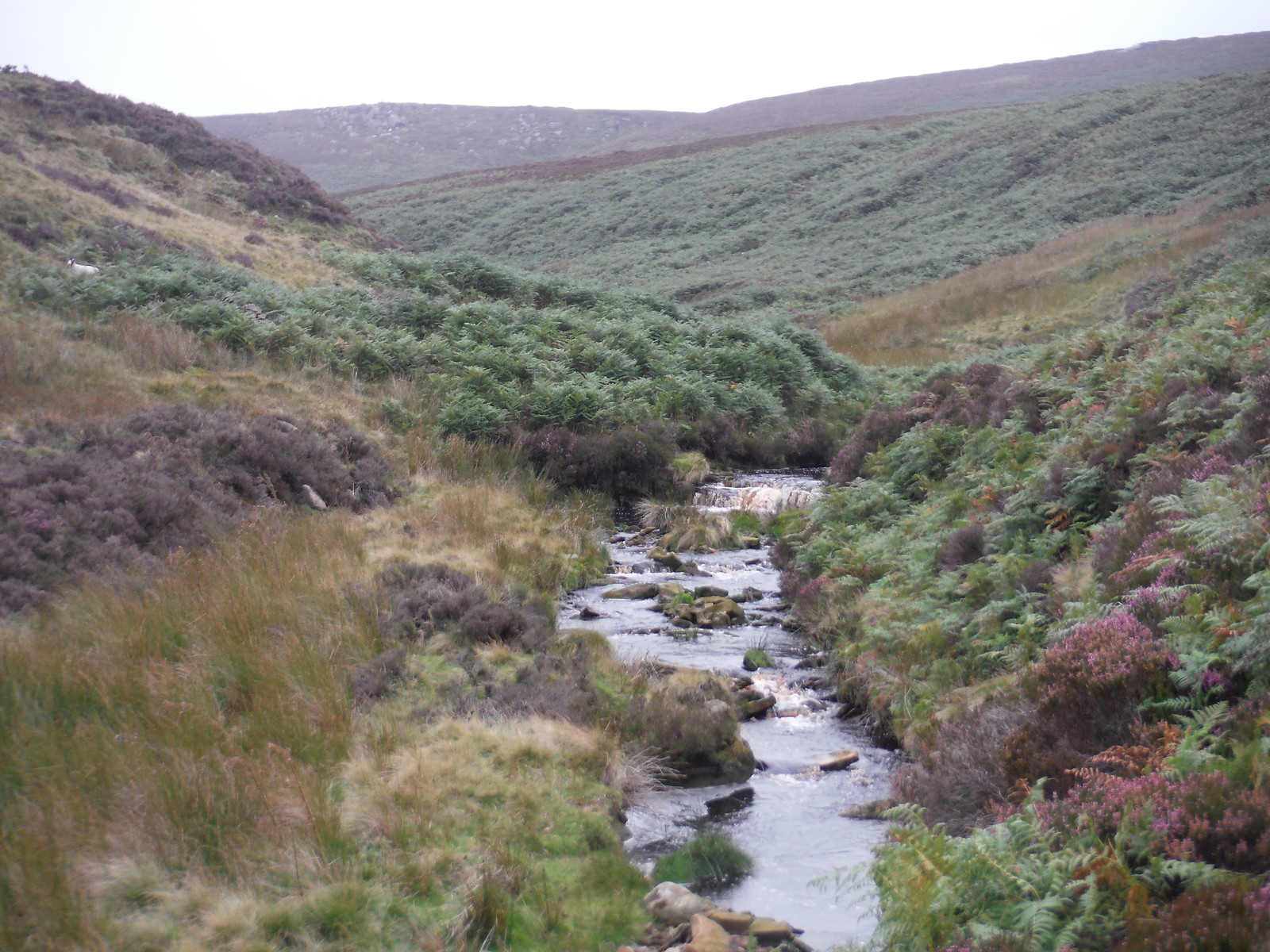 Upper Derwent Valley, upstream SWC Walk 350 - Fairholmes Circular (via Bleaklow and Derwent Head)