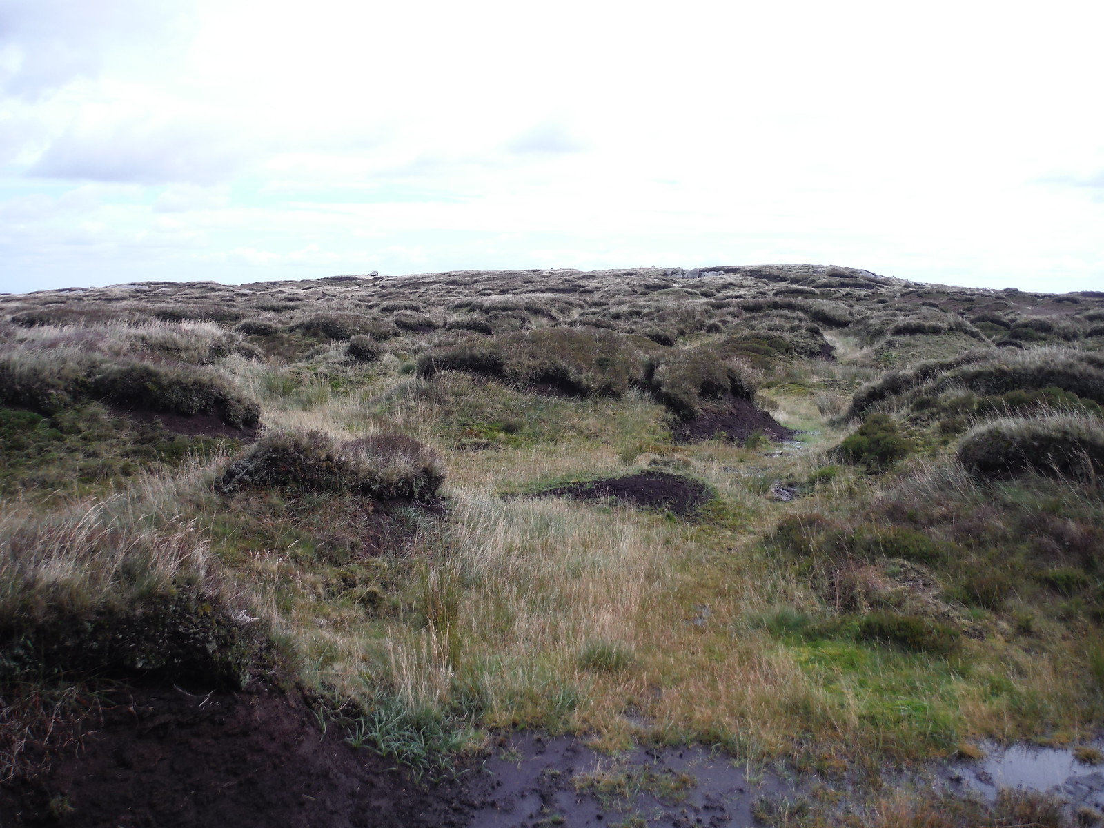 The Path across Bleaklow SWC Walk 350 - Fairholmes Circular (via Bleaklow and Derwent Head)