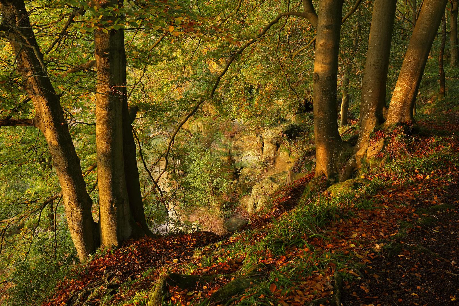 East Sussex Woodland in Autumn