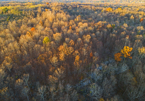 fall autumn november hike hiking adventure outdoors nature landscape aerial trees sunset beautiful peaceful quiet calm calming colorful three falls woods waterfalls manlius drones dji phantom4