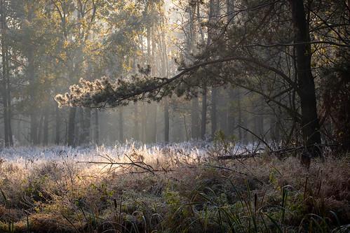 landscape nature poland mazovia flora tree morning hoarfrost frost