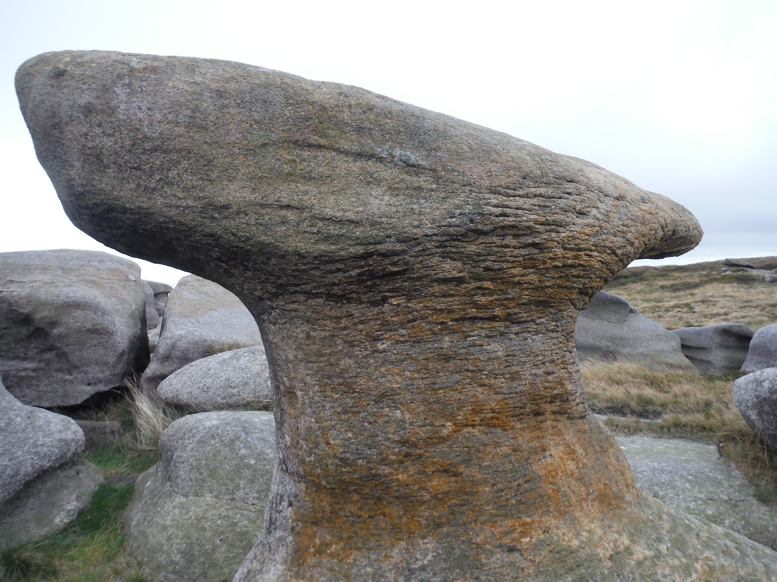 Bleaklow Stones (one of them) SWC Walk 350 - Fairholmes Circular (via Bleaklow and Derwent Head)