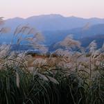 芒の穂と山の日暮れ