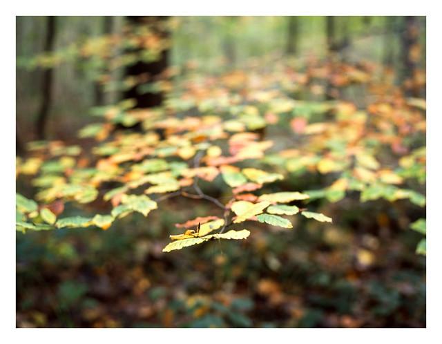 FILM - Autumn bokeh