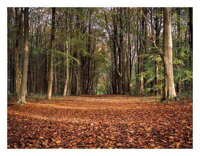 FILM - Whitwell autumn