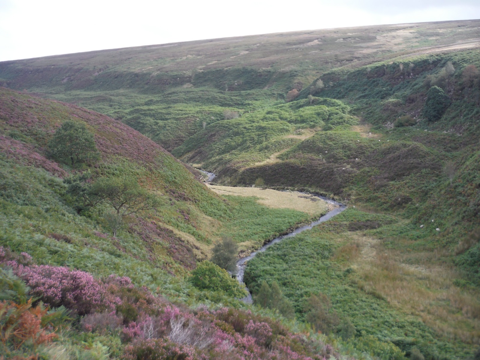 Deer Holes and Lands Side, Upper Derwent Valley SWC Walk 350 - Fairholmes Circular (via Bleaklow and Derwent Head)
