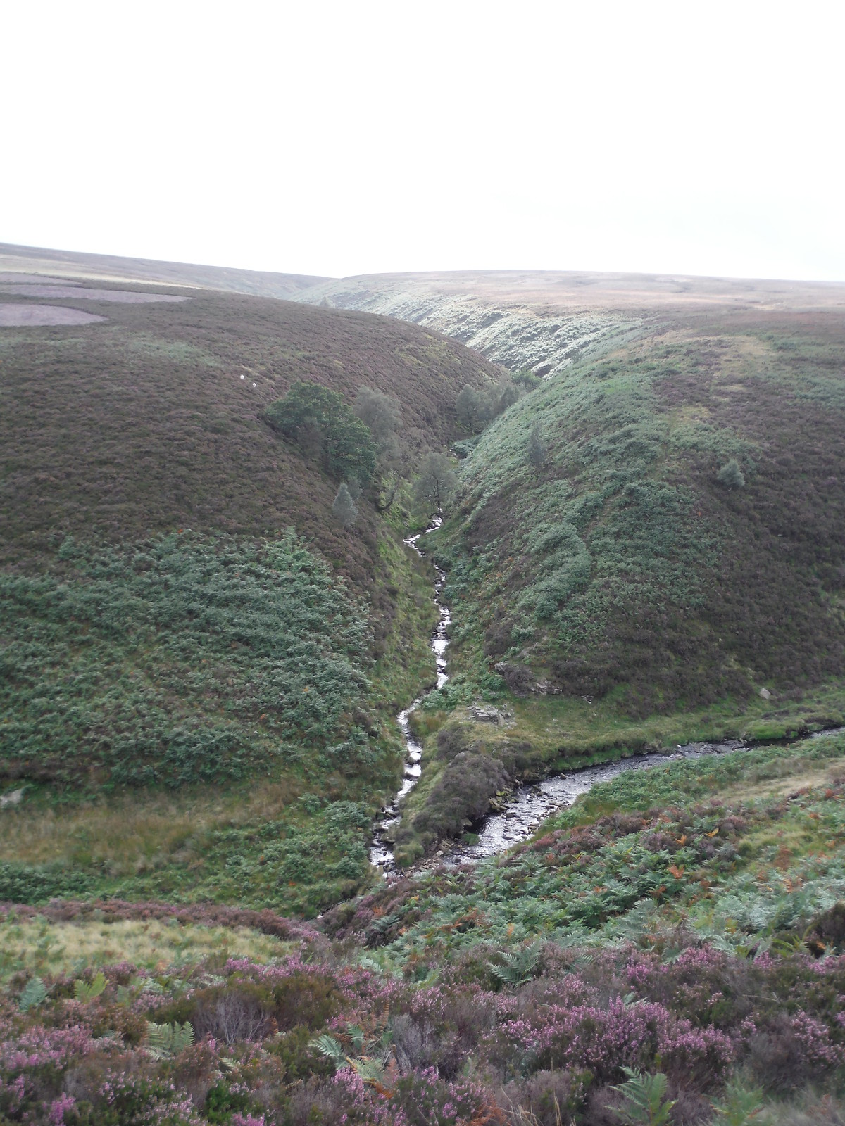Lower Small Clough, Upper Derwent Valley SWC Walk 350 - Fairholmes Circular (via Bleaklow and Derwent Head)
