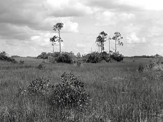 Sawgrass Glade