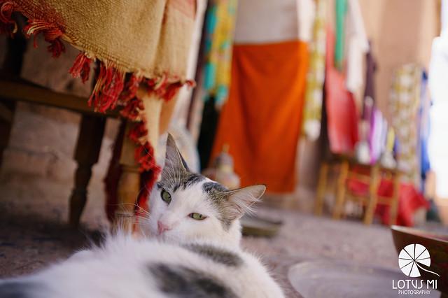 Cat In Ouarzazate