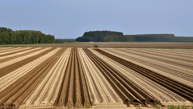 Groningen: Vierhuizen potato field