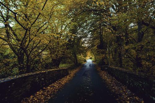 autumn trees leaves landscape wales bridge