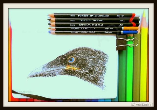 Krähe [mein Skizzenbuch mit Kohle] / Alle Rechte vorbehalten © AndiDroid ;-)
