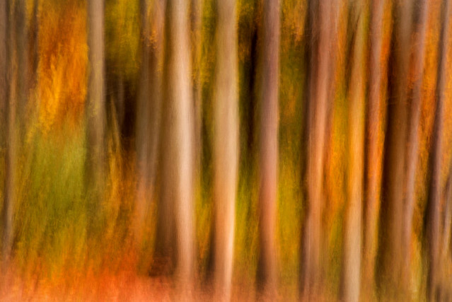 Spooky Artistic Trees 3-0 F LR 10-29-19 J149