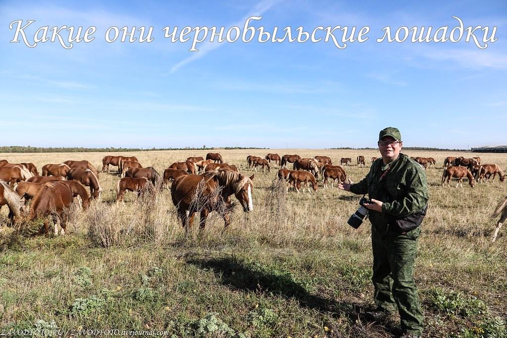 Какие они чернобыльские лошадки