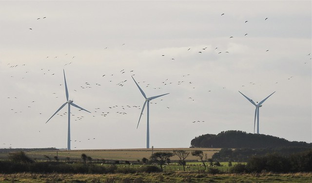 Airborne Geese and Wind Turbine