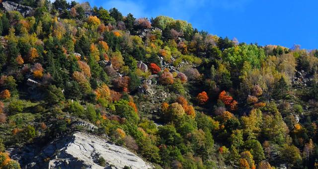 Feuilles et couleurs d'automne