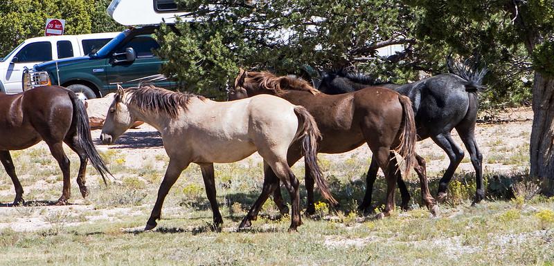 Wild-Horse-8-7D1-092219