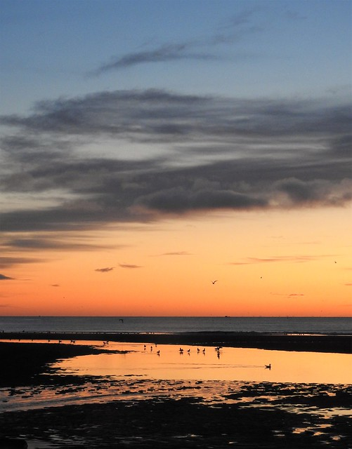 Seagull Pool Sunrise