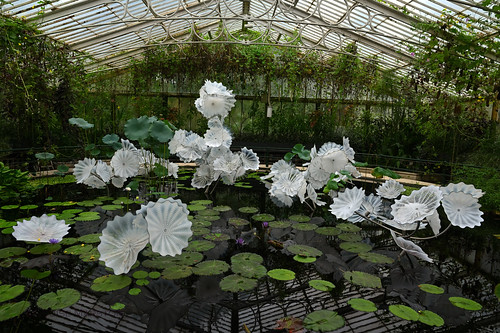 Chihuly in the Waterlily House