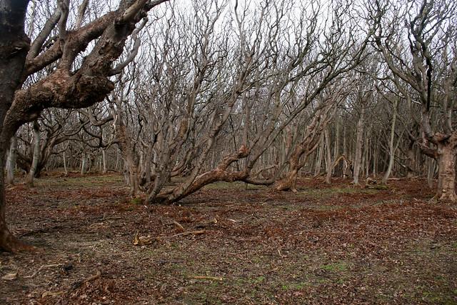 Woodland at Gosfortd