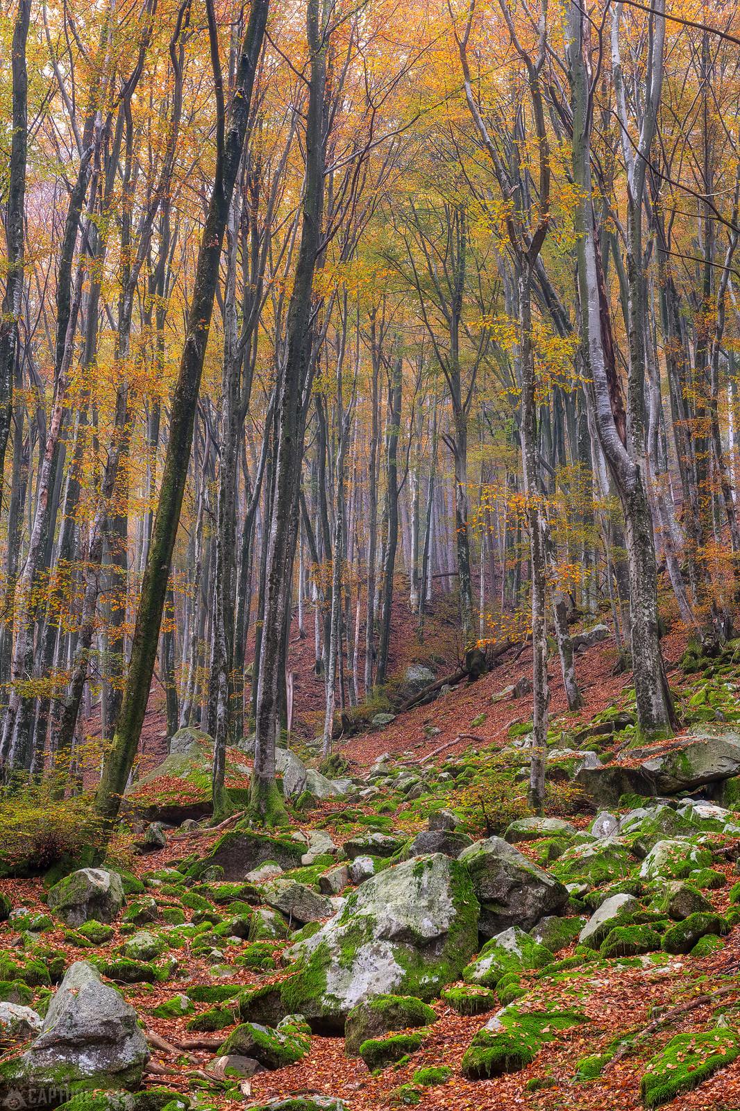 Colored forest - Lavertezzo