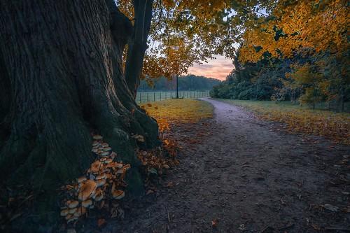 sgraveland noordholland nederland boekesteyn sunset cffaa