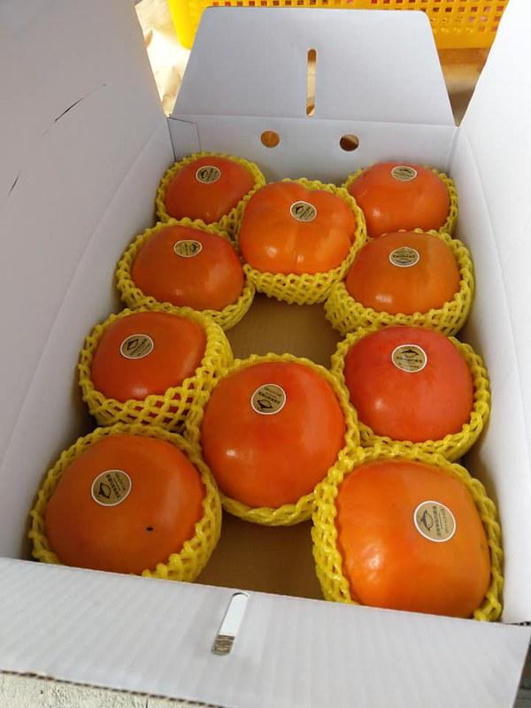 南橫山甜柿  笑咪咪綠色農場