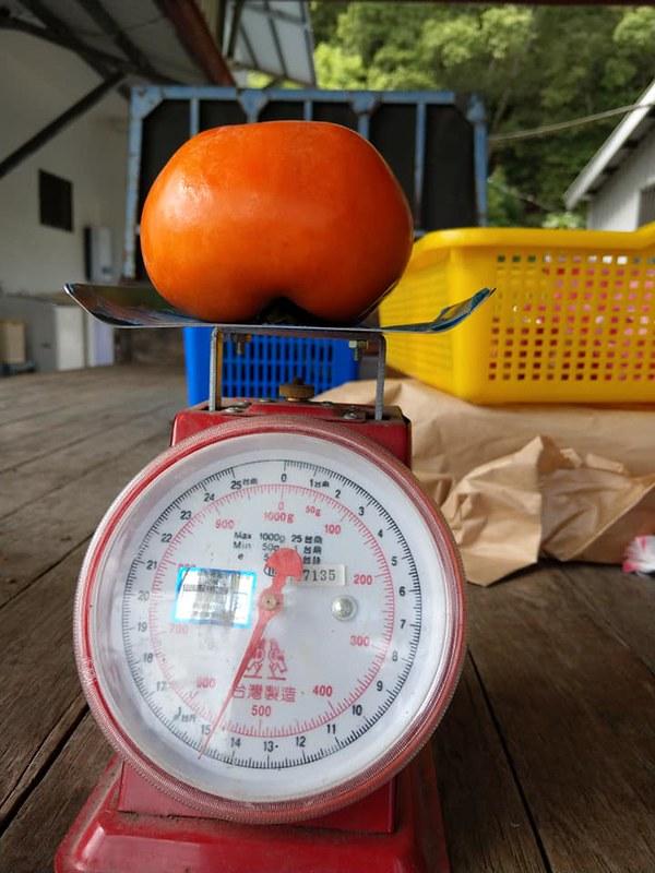 南横山甜柿  笑咪咪绿色农场