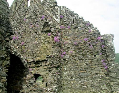 Flwering Plants, Glenluce Abbey