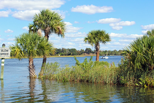 river landscape scenery water creek florida palmtrees crystalriver