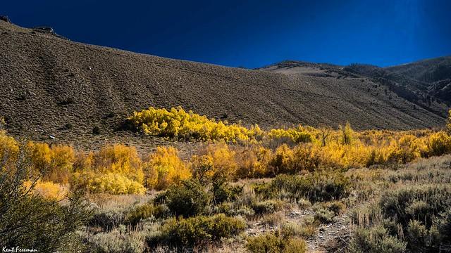 Fall Colors Bishop California